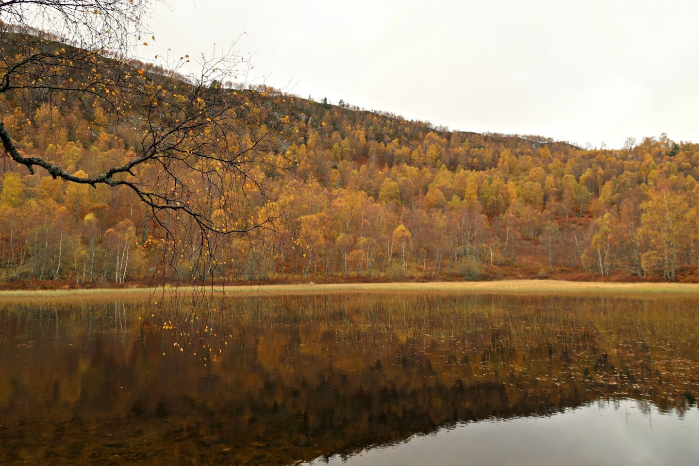 autumn leaves scottish highlands