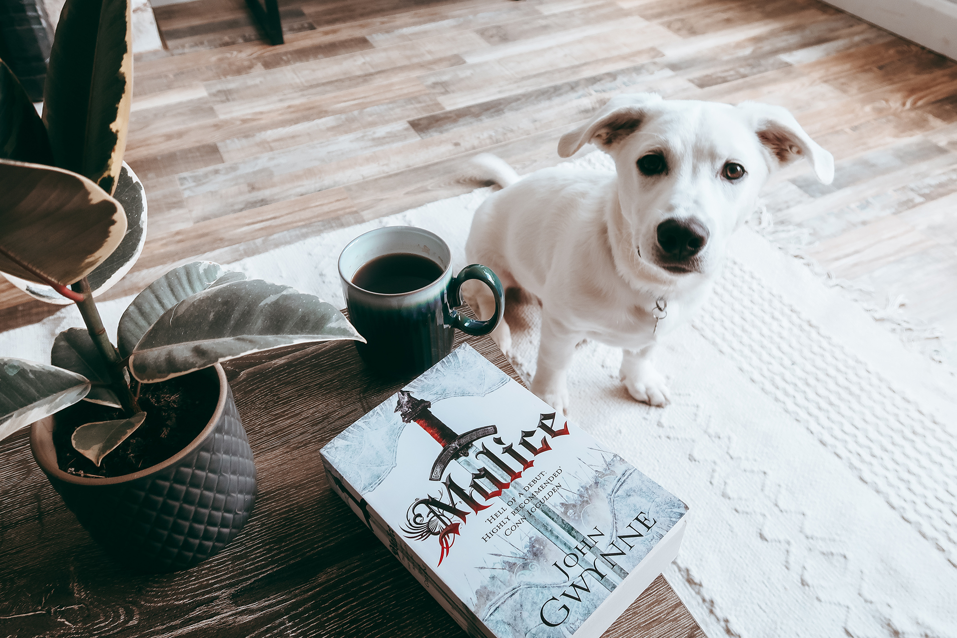 puppy sitting in front of book looking cute