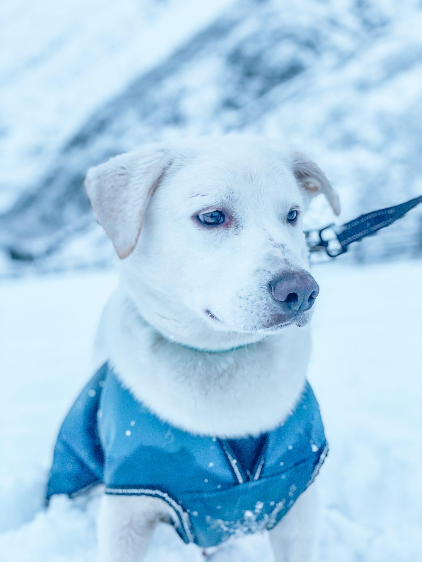 cypriot rescue dog in snow
