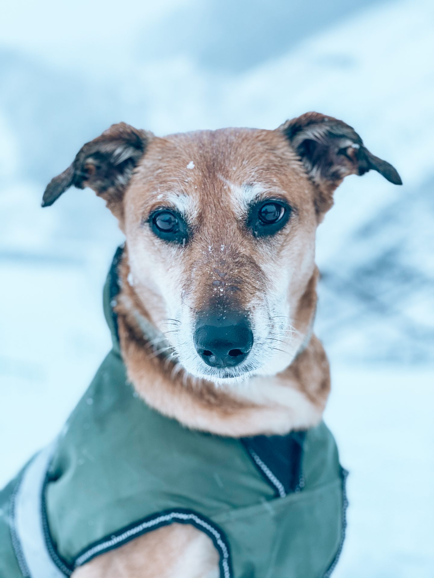 rescue dog in snow